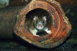 Обитель Крысы 4